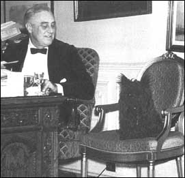 Fala sits in chair next to FDR at desk